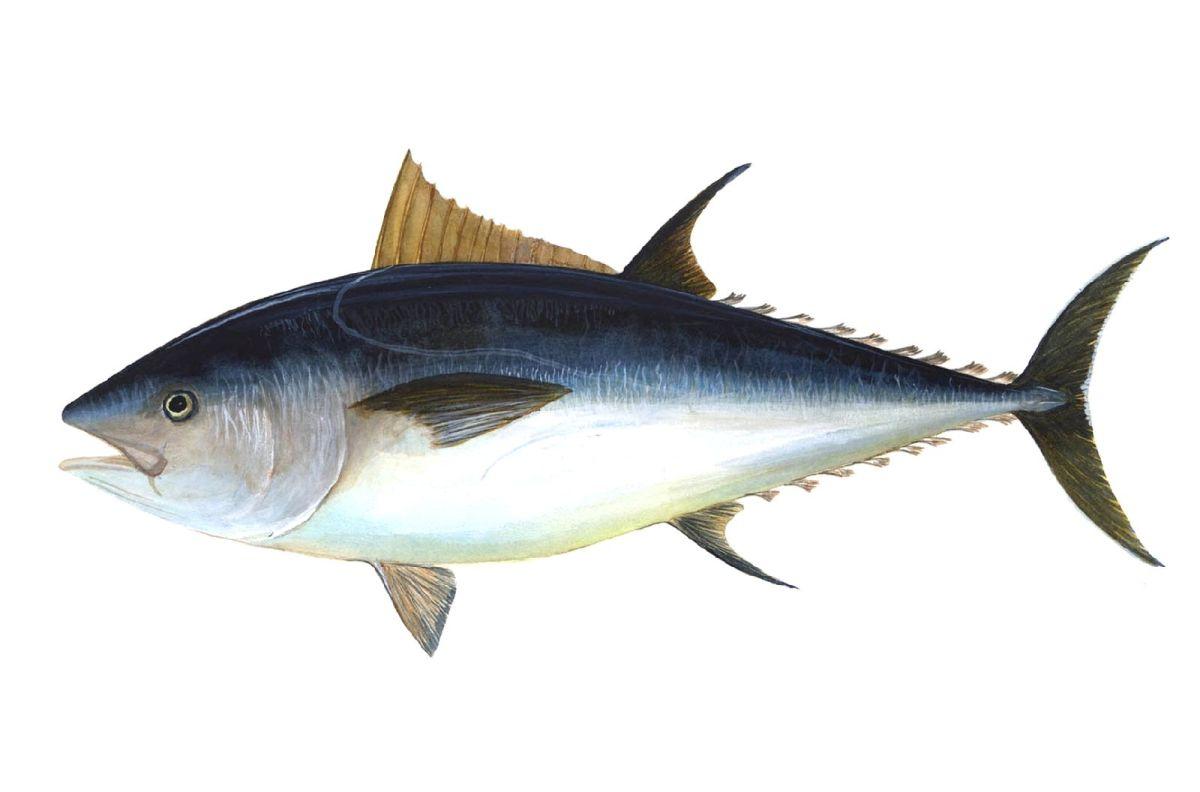 """Competitividad con base en el enfoque """"oceano azul"""", la innovación frugal y la antifragilidad: Alimentos Prosalud como caso referencial"""